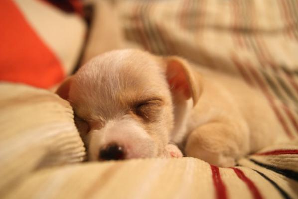 良質な睡眠をとるための5つのコツ(良質な睡眠)