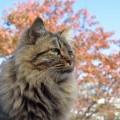猫が便秘をしないように気を付ける5つのポイント