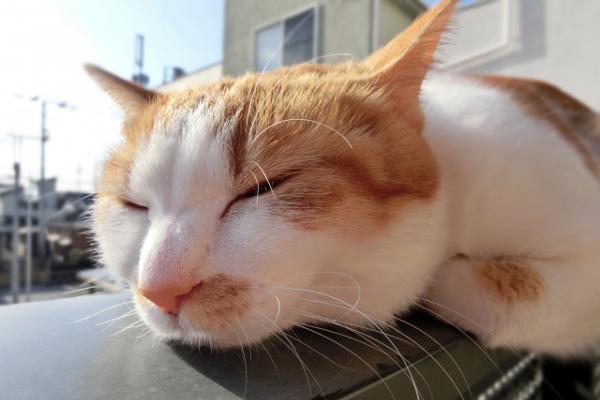 熟睡する方法として言われている5つのこと