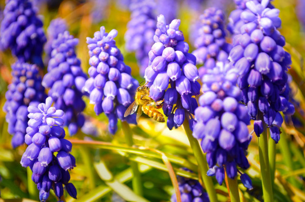 蜂に刺される夢が示している5つのこと