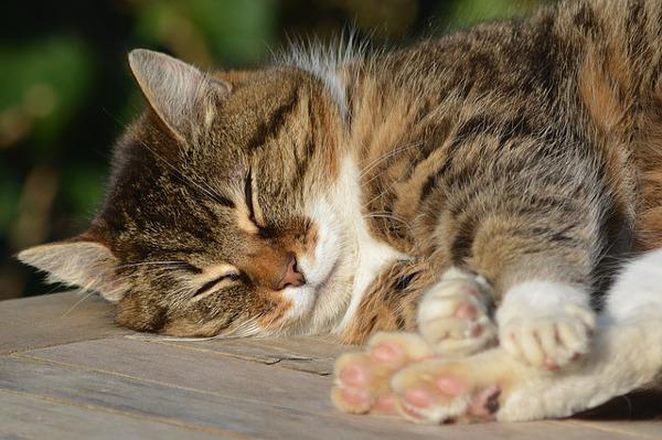 猫の夢はなぜ見るの?考えらえる5つのこと